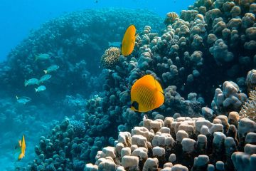 photo of sea animals near coral reefs