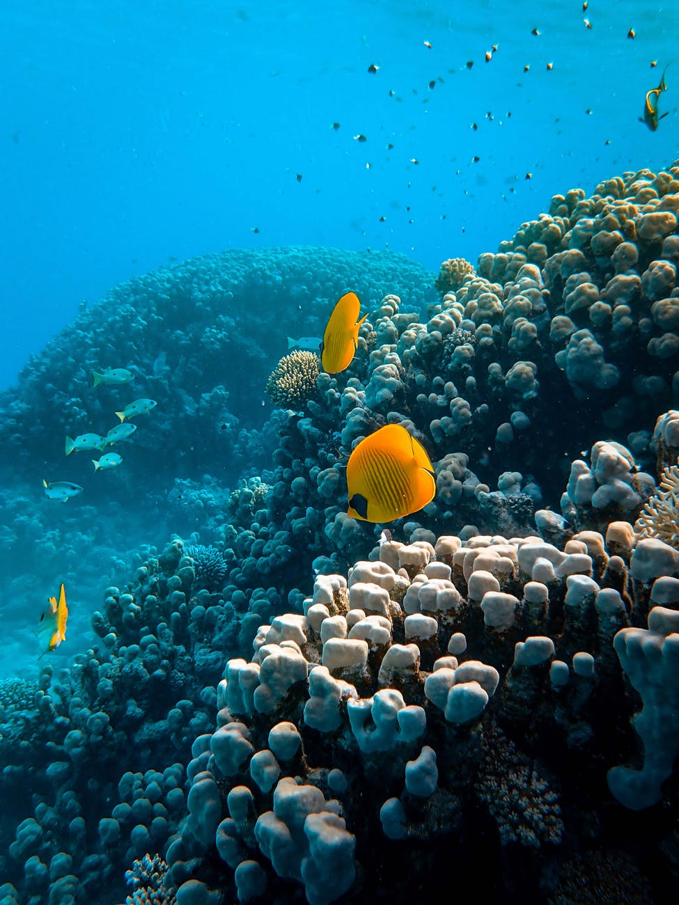 photo of sea animals near coral reefs
